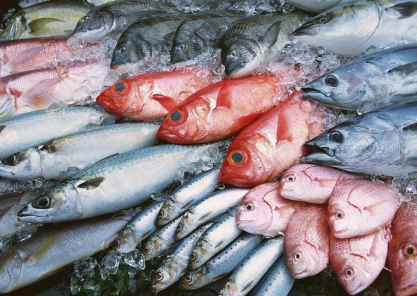 Купить рыбу оптом дешево